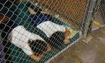 Niños inmigrantes enjaulados en 2014, cuando en la Casa Blanca estaba Obama, no Trump