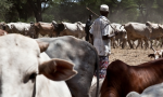 Pastoreo en África