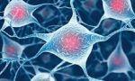 Últimos avances en medicina genética... con células madre adultas, naturalmente
