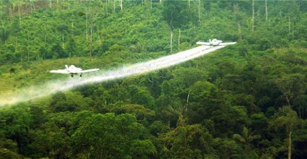 Colombia. Santos detiene la fumigación de los campos de coca por las advertencias de la OMS y las protestas de los cafeteros