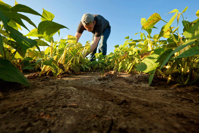 La meteorología actual está afectando a cosechas y pastos