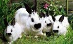La OIE constata una evolución positiva en el mundo en el uso de antibióticos en animales