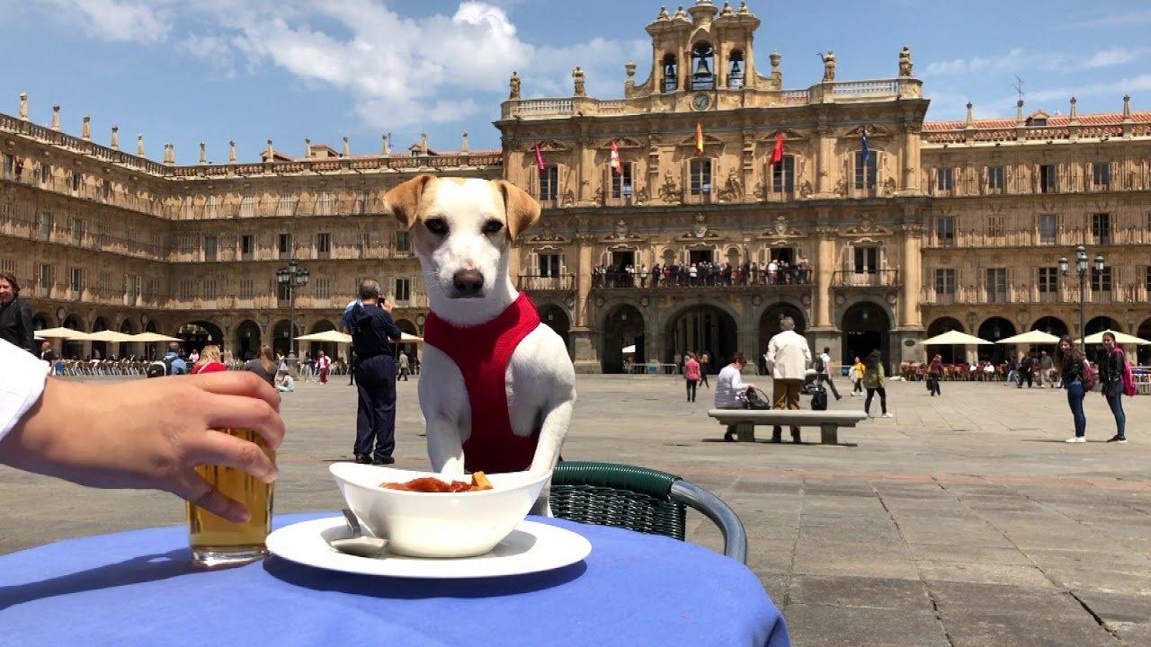 Pipper, disfrutando de un tentempié en una terraza de Salamanca