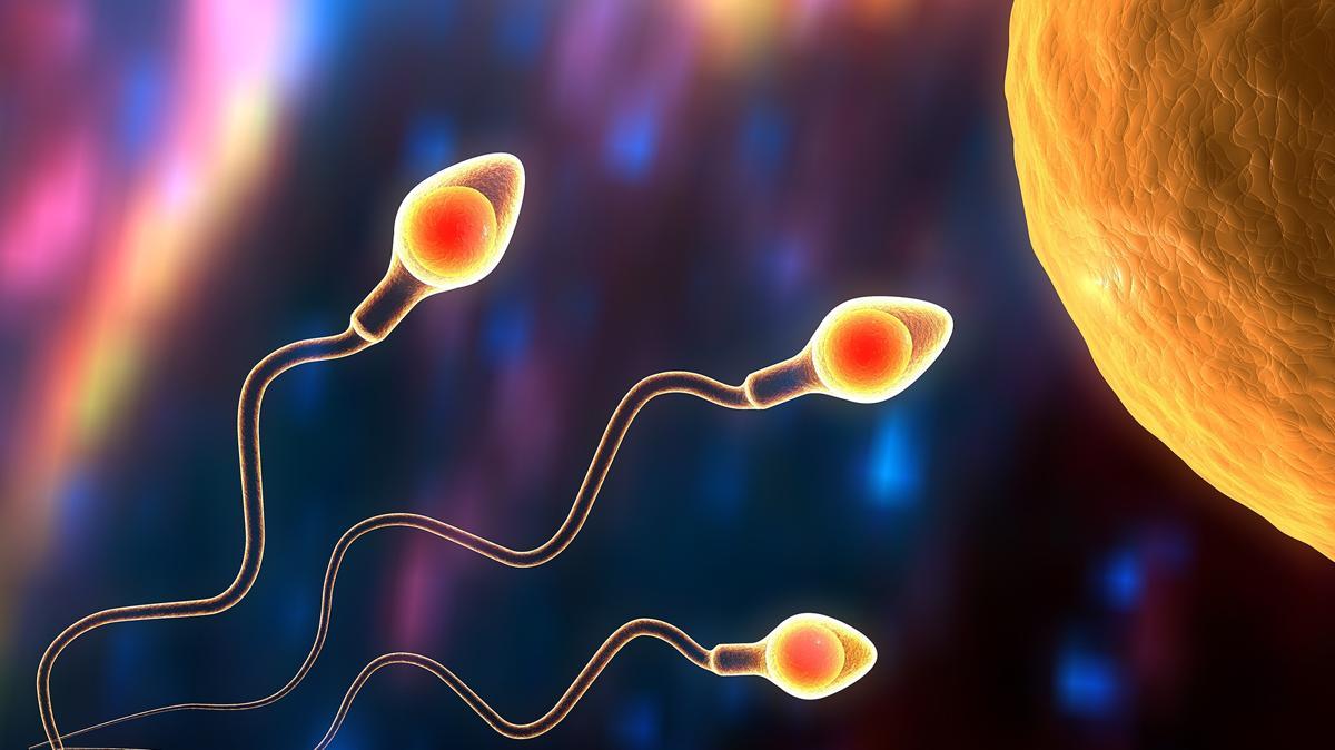 'Stupid Society': mandemos espermatozoides lejos de la Tierra y tengamos hijos en el espacio