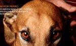 Concierto para perros, en el Centro Canino Miraflores