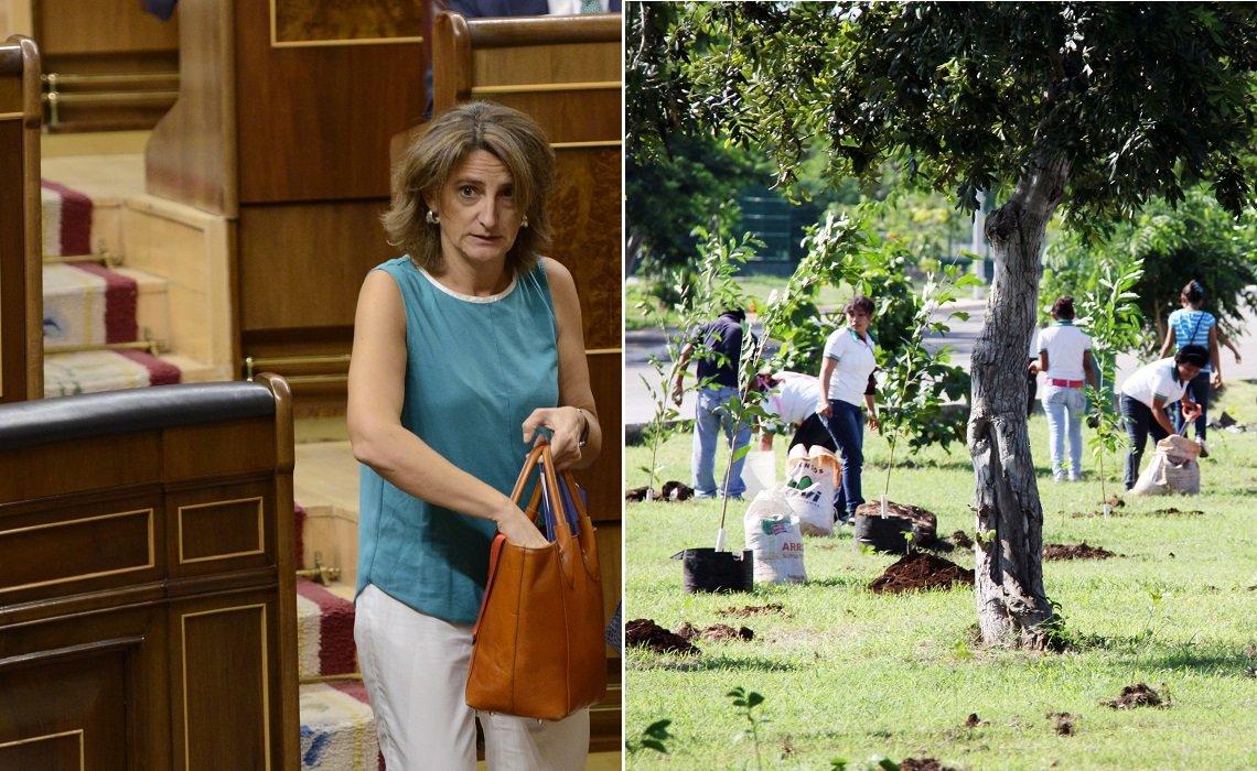 La ministra Ribera quiere ser la más verde para reducir emisiones y descarbonización, pero no ha hablado de reforestación