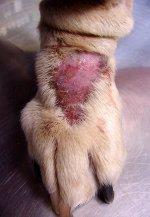 Herida de un perro