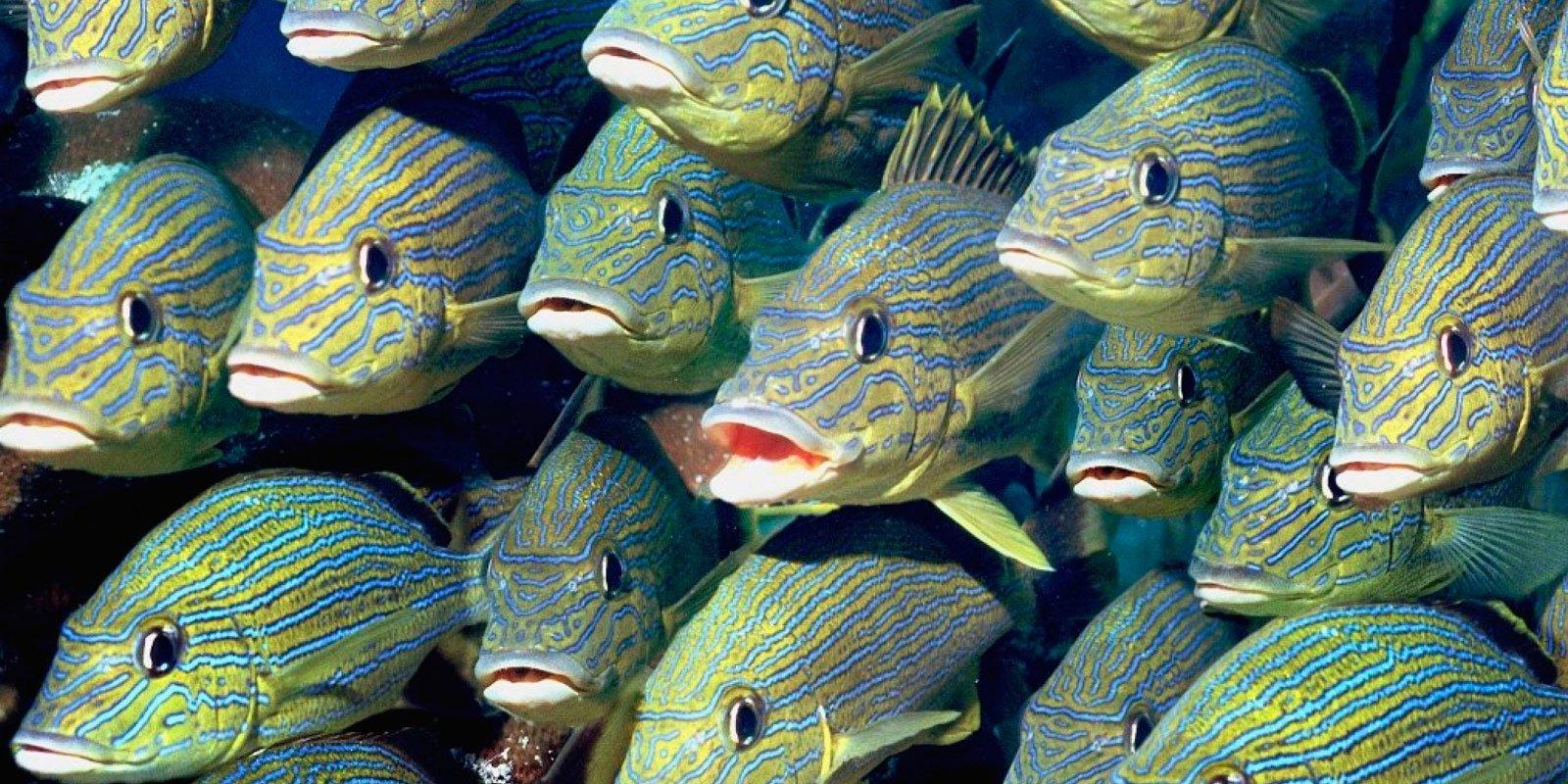 Los peces tienen sentimientos