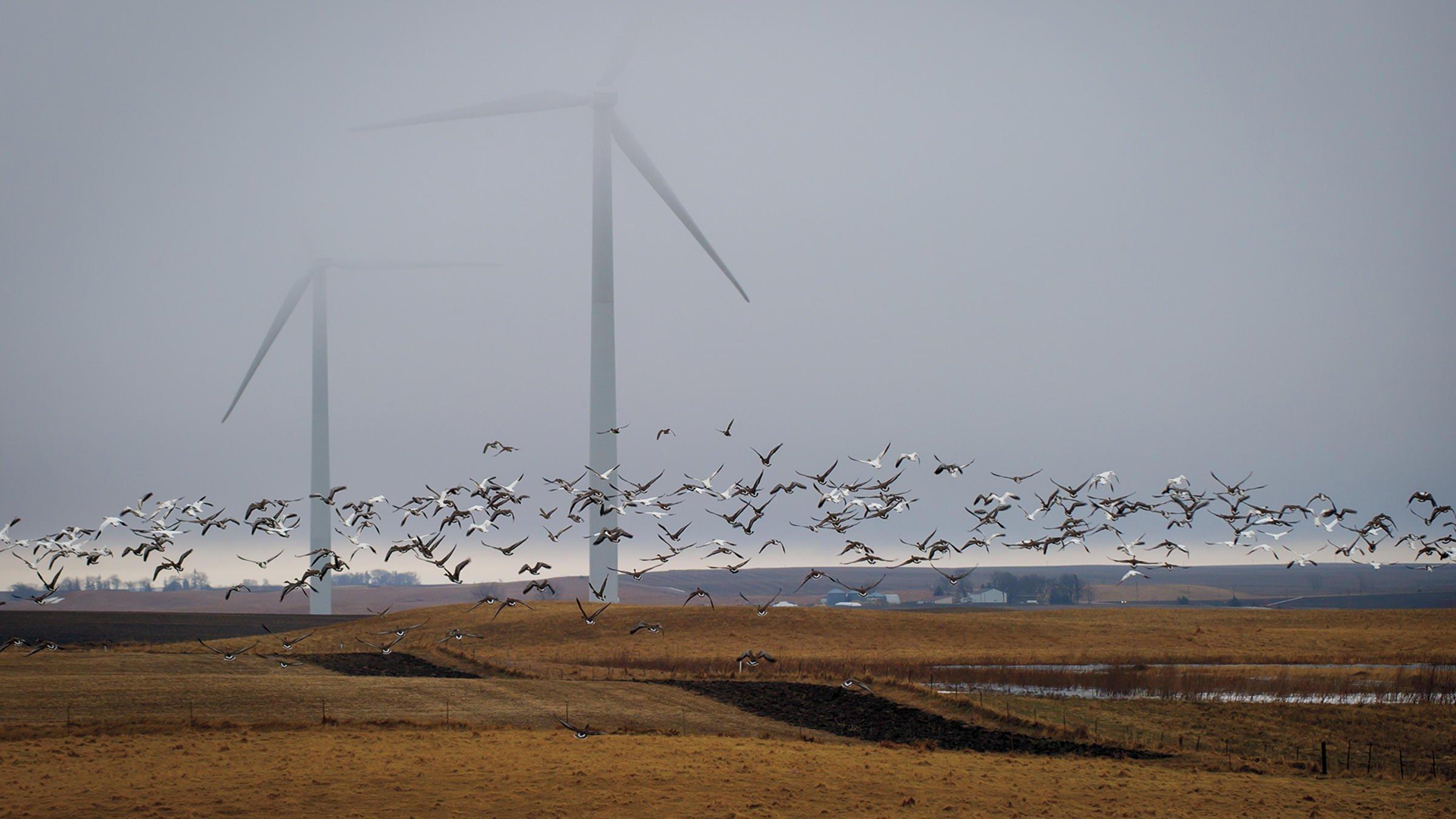 Putin defiende a pájaros y gusanos ante los molinos de viento