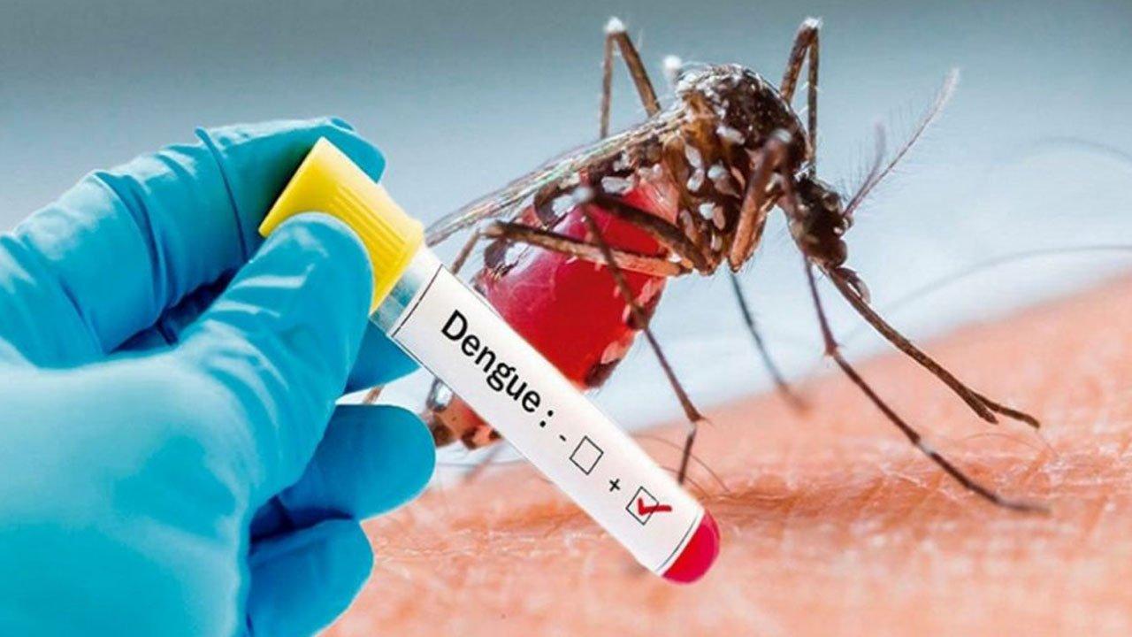 Argentina. Buenos Aires vive una epidemia de dengue en plena crisis del coronavirus
