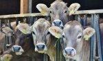 Menos carne, y menos áun, proveniente de las contaminantes vacas, para salvar el planeta