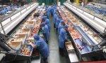 Trabajadoras en una línea de producción