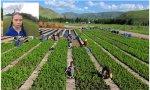 Agricultura en Holanda