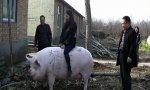 Cerdos gigantes
