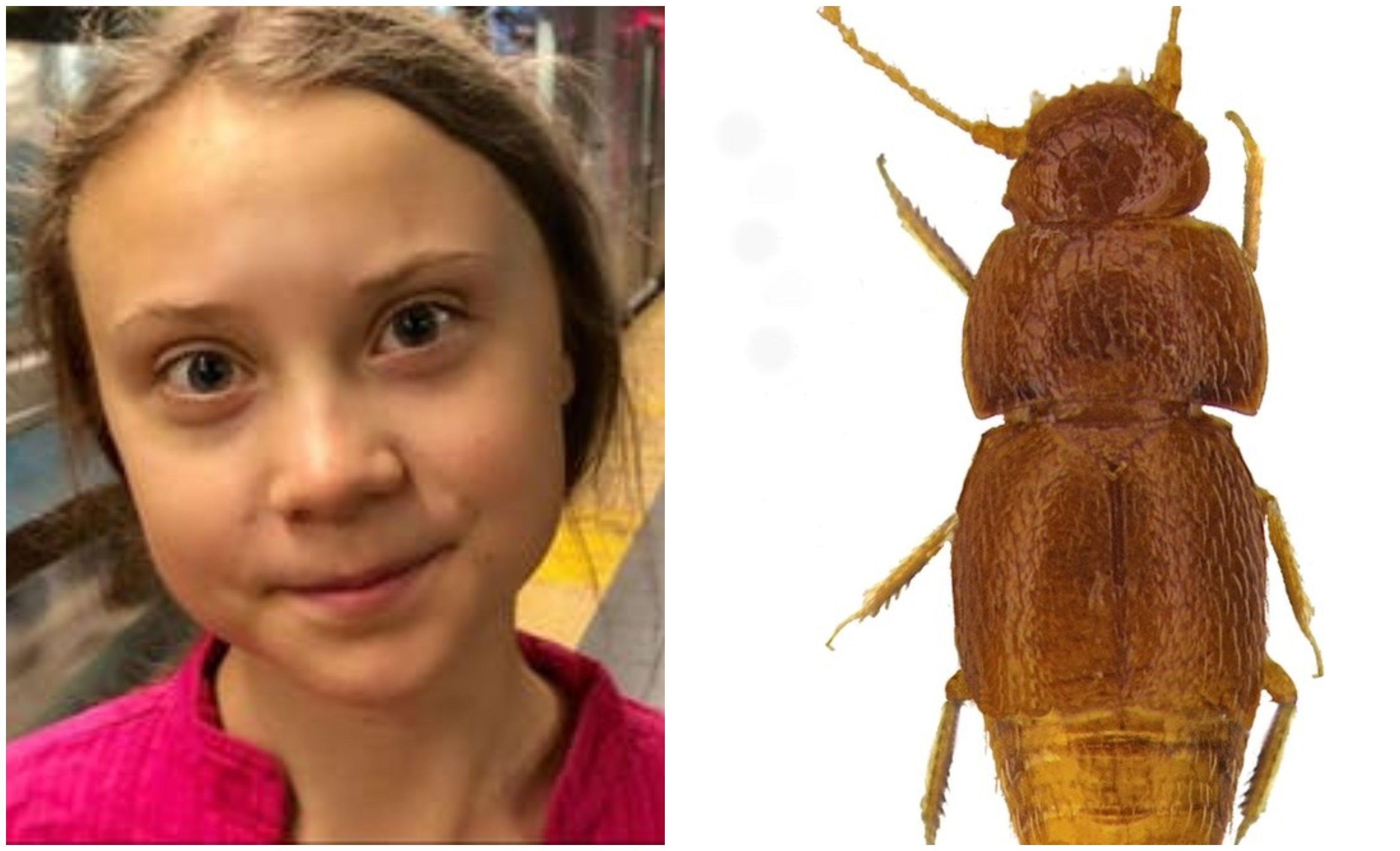 Greta y el escarabajo de la miel que lleva su nombre