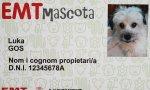 El 'EMT mascotas'