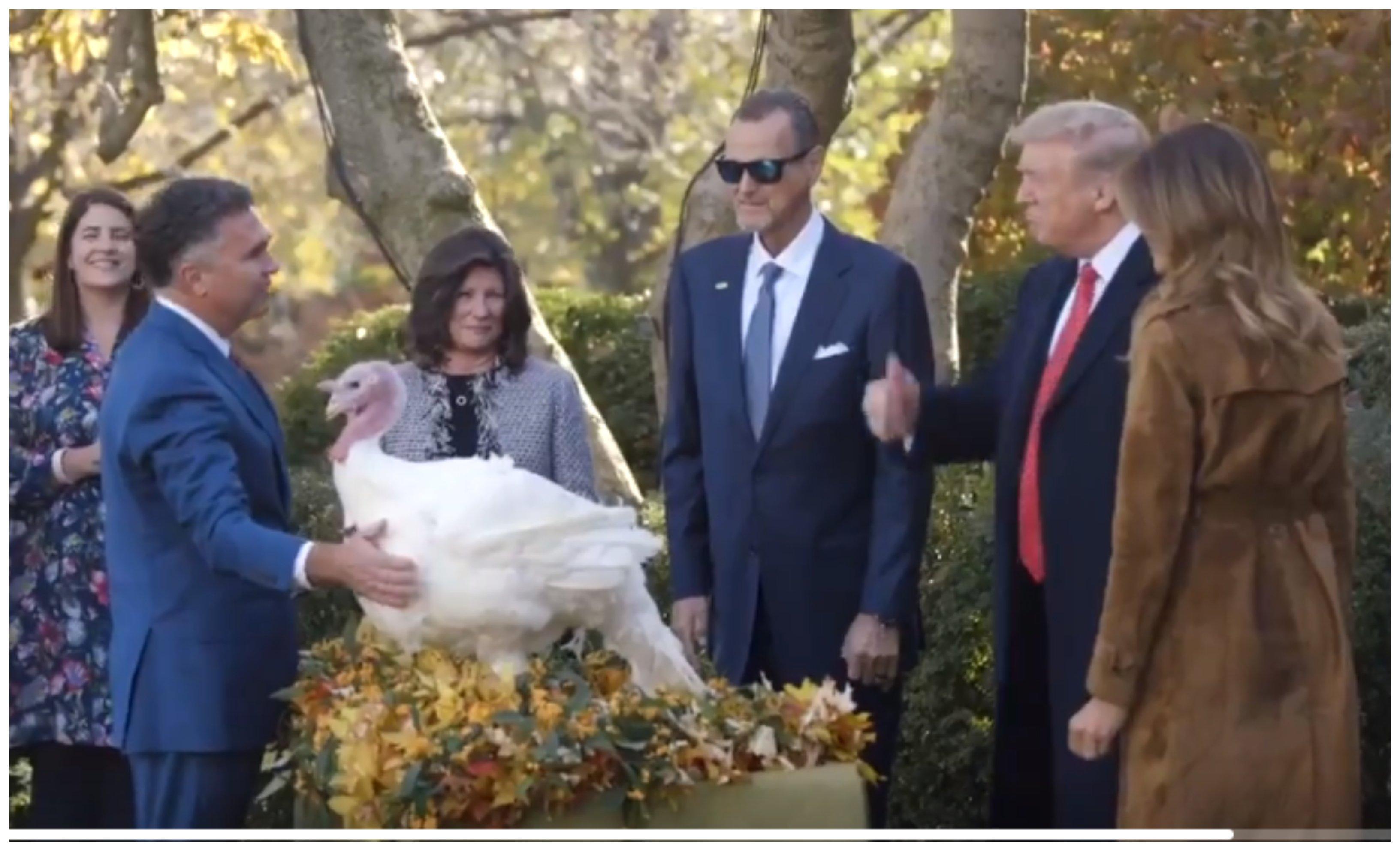 Uno de los pavos indultados por Trump en Acción de Gracias