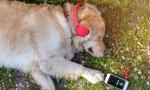 Estupidiario. Spotify vende música para que las iguanas sean más felices… y los ratones, perros, gatos o pájaros