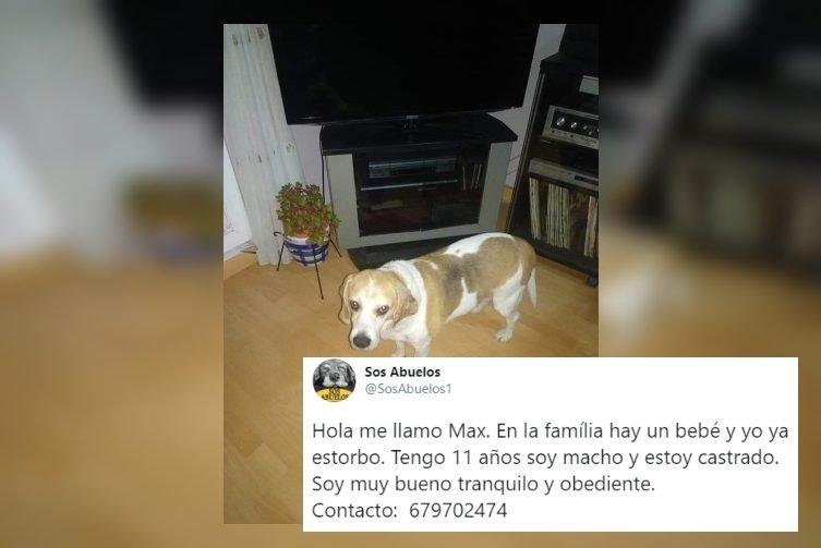 Tienen un hijo y dan a su perro en adopción tras 11 años porque 'estorbaba'… ¡Qué poco corazón!