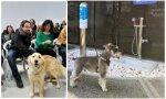 Una gran idea para Pablo Iglesias: el aeropuerto de Osaka instala la primera zona de confort canino de Japón