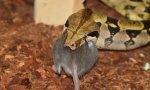 San Valentín: Ponle el nombre de tu ex a una rata y dásela de comer a una serpiente