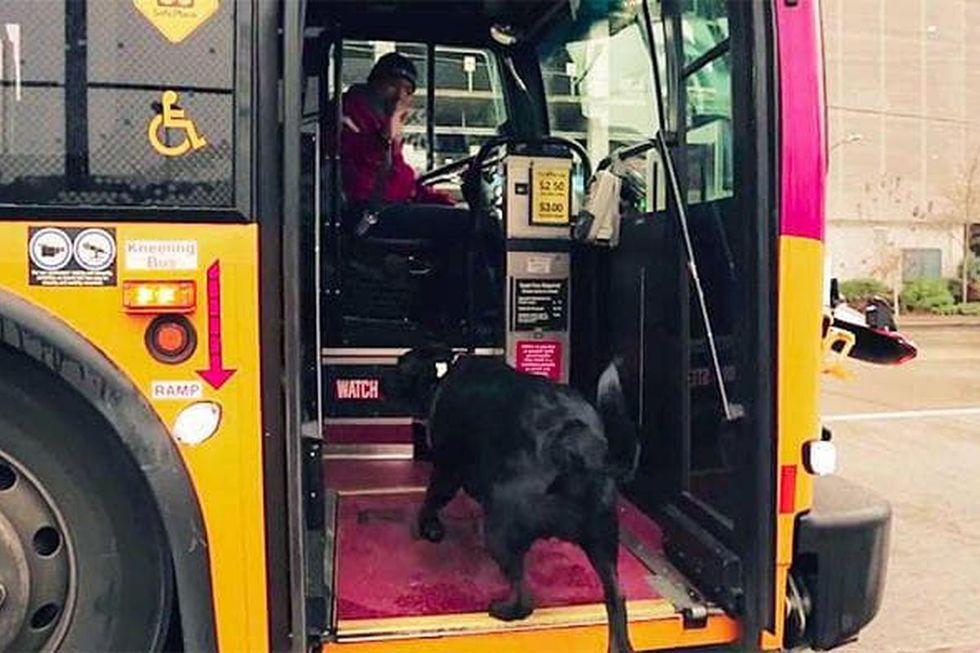 El enigma de Eclipse: ¿ha sido su dueño el que ha impulsado al can a viajar sola en el autobús, al negarse a pasearla debido a los siete grados de temperatura media de Seattle?