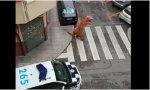 Picaresca anticoronavirus: la Policía pilla a dos ciudadanos al saltarse el confinamiento. Uno disfrazado de dinosaurio y otro paseando un perro de peluche