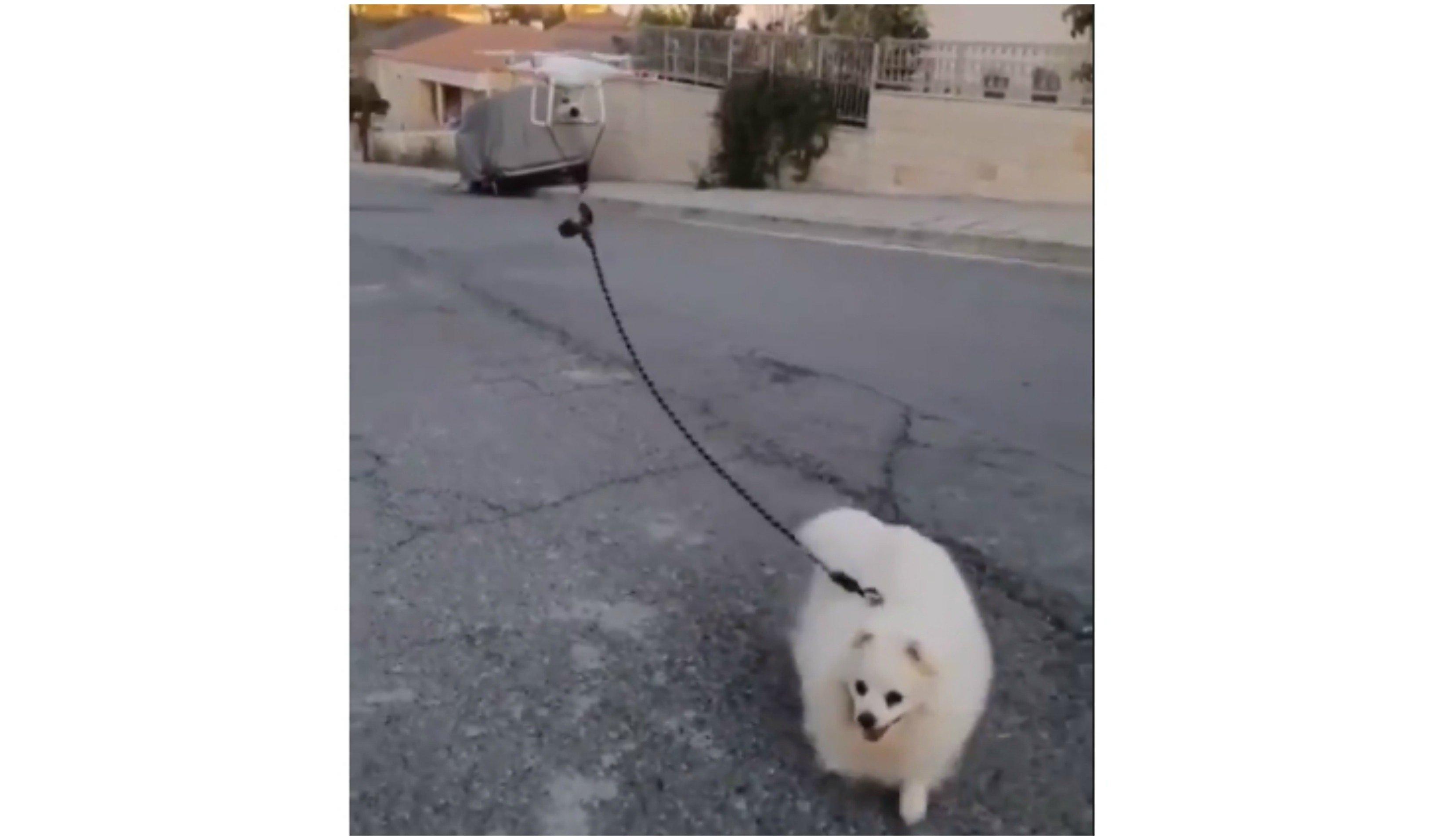 Escenas coronavirus. Un dron pasea a un perro