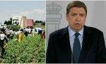 Los parados del ministro Planas no quieren trabajar: no se apuntan para la recogida de fruta. Sin embargo, los inmigrantes ilegales, sí