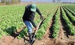El campo afronta ahora importantes campañas de recogida (frutas de hueso, ajos, cebollas, patatas y espárragos)