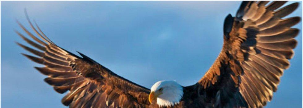 Las águilas, que en su vuelo crestean las altas cumbres que escalamos. No llenan las ansias de felicidad del corazón, del hombre necesidad