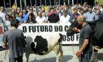 Precios de la leche. Las importaciones y las 'trampas' ahogan a los ganaderos españoles