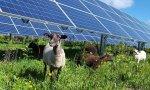 Endesa desarrolla diferentes soluciones competitivas desde el punto de vista económico, ambiental y social