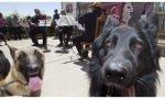Sensibilidad sociocompromís: suspendido el concierto para perros de Llíria (Valencia). Iban demasiados