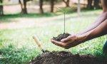 La reforestación, una iniciativa fácil y al alcance de todos para cuidar el medio ambiente