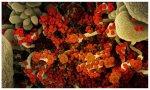 Imagen de una una célula muy infectada con partículas del virus del SARS COV 2 (naranja)