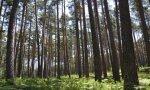 Los árboles son sumideros naturales de dióxido de carbono