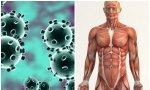 Los expertos -cuánto han cundido los expertos- dicen que se puede sufrir a un mismo tiempo, gripe y covid, el 'Grivid', con resultado de muerte